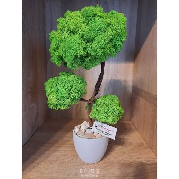 Bonsai cu licheni naturali verzi