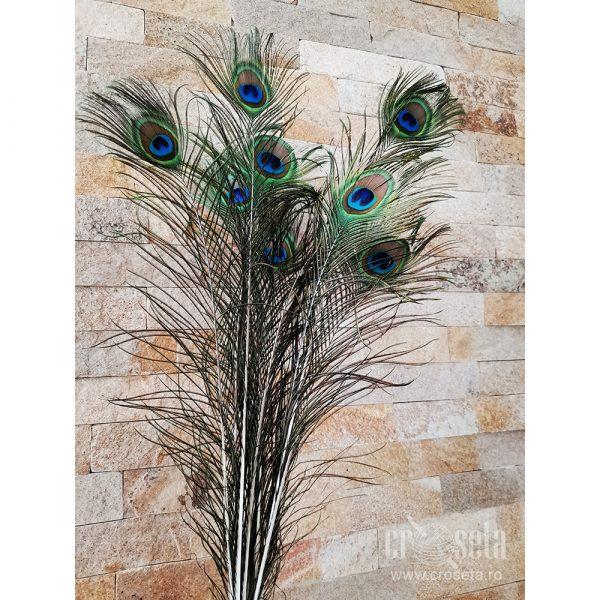 Set 9 pene de păun naturale, 70-80 cm